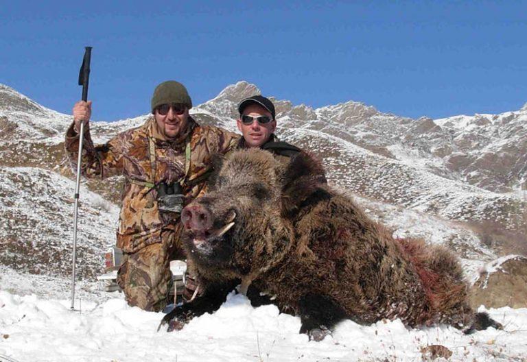 wild-boar-snow-tracking-hunt-turkey